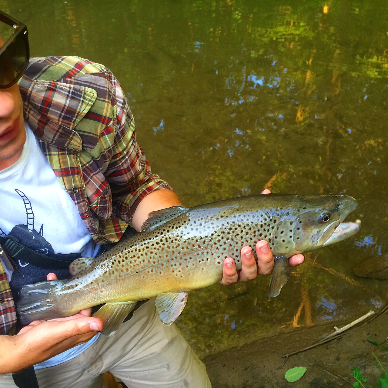 Fly fishing western ny jdsflyfishing for Trout fishing ny